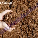 EUCY MULCH copy