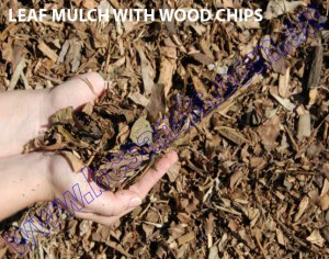 LEAF MULCH WITH WOOD CHIPS copy